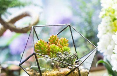 Comment entretenir mon terrarium ouvert ?