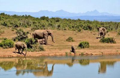 Partir en Afrique du Sud et organiser une excursion dans ses parcs