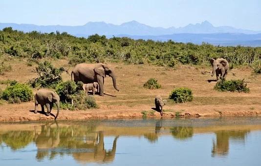 parcs naturels Afrique du Sud
